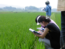 China ICAMA Consults on Residue Definition for 477 Pesticides